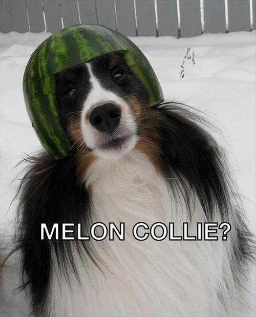 Are You Feeling A Little Melon collie?