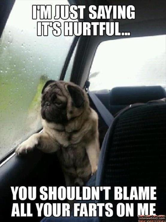 Just Farted?  Blame The Dog!